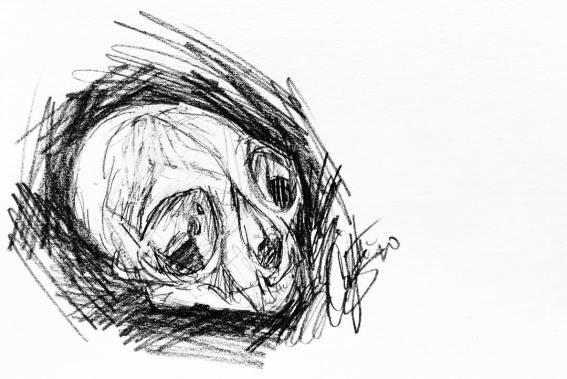 Campagno, Caitlin. Domestic Cat Skull Study. 2017. Graphite on Scrap Paper.