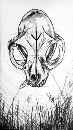 Campagno, Caitlin. Bob Cat Skull Study. 2017. Graphite on Scrap Paper.